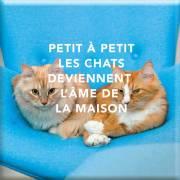 131 Magnet Petit à petit les chats deviennent l'âme
